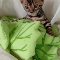 Бенгальские котята из питомника, в Челябинске