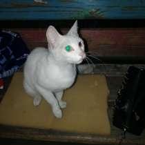 Отдам даром красивую кошечку, в Омске