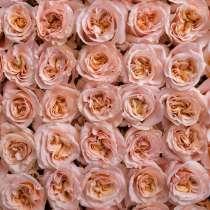 Роза оптом в Северобайкальске Шиммер к 8 марта, в Северобайкальске