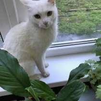 Белая кошечка, в Краснодаре
