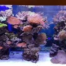 Наши аквариумы купить в Алматы, в г.Алматы
