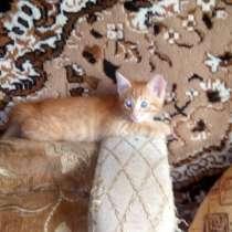Красивые котятки, в Нижнем Новгороде