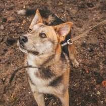 Пёс с янтарными глазами, в Санкт-Петербурге