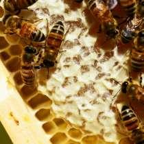 Продам мед со своей пасеки, в Красноярске