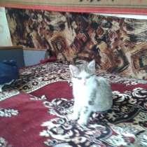 Котёнок в хорошие руки, в г.Горловка