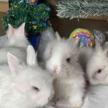 Декоративные карликовые кролики, в Москве