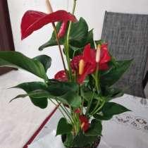 Продаются цветочки, в Бузулуке