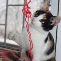 Эксклюзивные котята (4 мес.) в дар, в Москве