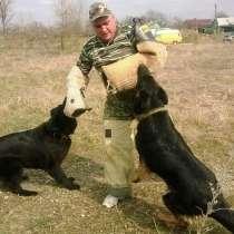 Дрессировка собак, в Выселках