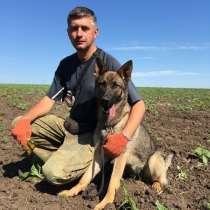 Дрессировка собак,корма и товары для животных., в г.Днепропетровск