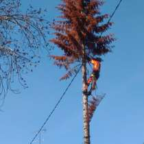 Спил и обрезка деревьев, puu loikamine, в г.Тарту