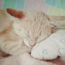 Котёнок(Приучен к лотку), в г.Жлобин