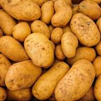 Закупаем картофель оптом, в Краснодаре