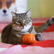 Необыкновенный зеленоглазый котик Тоша ищет семью, в Санкт-Петербурге