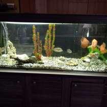 Продам аквариум в Ялте 450л, в Ялте