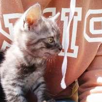 Котенок 2 месяца, в г.Херсон