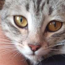 Кошка, как в рекламе, в Салавате