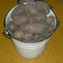 Продам картофель, в Сыктывкаре