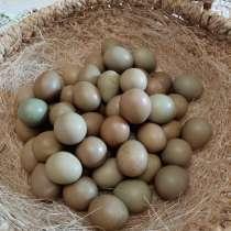 Яйца фазаньи, в Серпухове