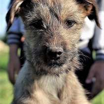 Смелая собачка хочет стать домашней, в Великом Новгороде