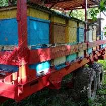 Пчеловодство, в г.Миоры