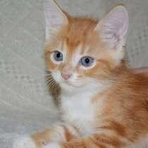 Красивейшие котята в дар!, в г.Витебск