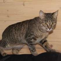 Кошка рысь, в Москве