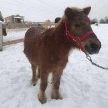 Упряжная пони, в Щербинке