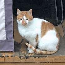 Надоевшая игрушка. Ласковый молодой котик Маркоша, в Москве
