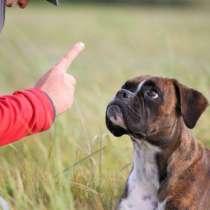 Обучение собак, в отсутствии владельца.\курс 14 дней\, в Екатеринбурге