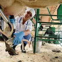 Машинист машинного доения в Литву, в г.Могилёв