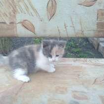 Котята, в Уфе