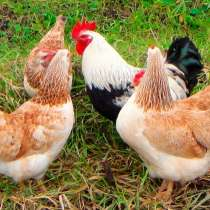 Комбикорм для кур-несушек ПК 1-1; ПК 1-3; ПК 3, в Железнодорожном