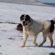 Возьму Собаку бесплатно крупной породы кобеля для двора, в г.Луганск