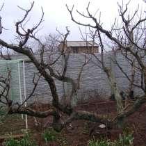 Квалифицированная обрезка сада, в Севастополе