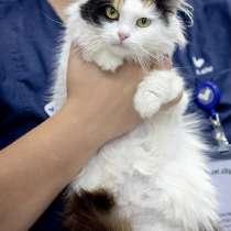 Пушистая трехцветка котенок Кусея ищет дом, в Москве