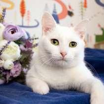 Ласковое облачко Шарлотта, молодая домашняя кошечка в дар, в Москве