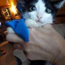 Котенок ищет дом, в Кемерове