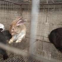 Кролики, молодняк возраст от 2 до 4 месяцев, в г.Комрат