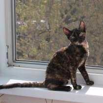 Уральский рекс котята, в Екатеринбурге