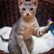Любопытный котёнок Матроскин в добрые руки, в Москве