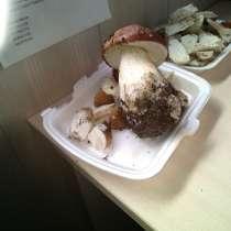 Продам грибы, в Пскове