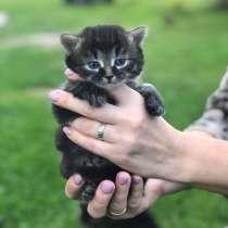 Котята в добрые ручки, в Волоколамске