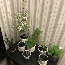 Комнатные растения, в Новосибирске