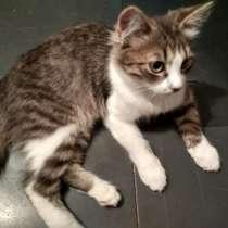 Котик 4 месяца, в Заречного