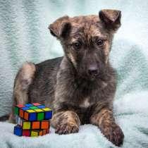 Лорд - необычно красивый щенок в добрые руки, в Москве