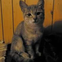 Котята в добрые руки, в Сергиевом Посаде