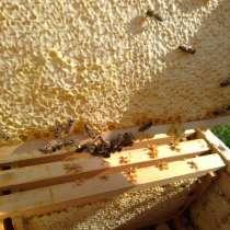 Сотовый мед, в Барнауле