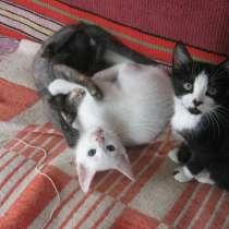 Котята в добрые руки, в г.Могилёв