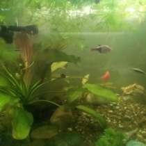 Продаю аквариум с рыбками, в Санкт-Петербурге